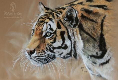 Amur Tiger ~ 2019