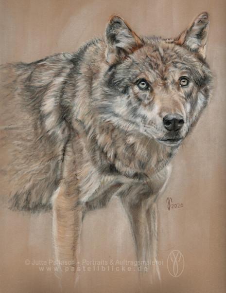 Wolf-2020