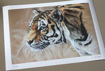 Tigerdruck.jpg