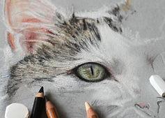 Pastellkreide Tierzeichnung Katzenportrait