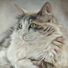 Katzenzeichnung in Pastellkreide, Jutta Pallasch, Pastellblicke - Tierportraits, Katze gezeichnet, Katzenportrait in Pastellkreide