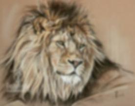 Wildlife Zeichnung, Löwe in Pastellkreide, Jutta Pallasch - Pastellblicke Tierportraits