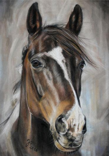 Pferdezeichnung, Pferdeportrait, Pferd gezeichnet
