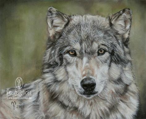 Wolf ~2016