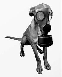 gas-mask-dog-canvas_edited_edited.jpg