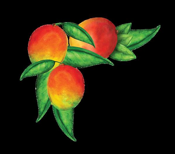fruit%20vines%20(3)_edited.png
