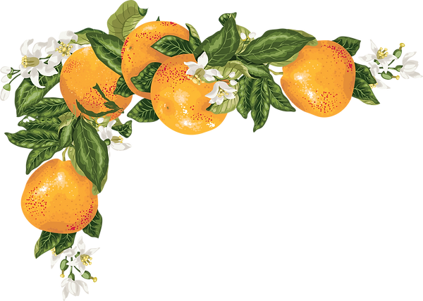 ORANGE VINE (2).png