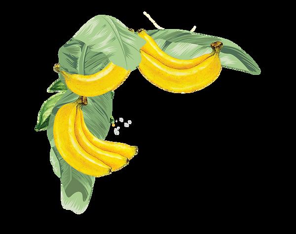 fruit%20vines%20(2)_edited.png
