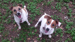 Pippa & Scarlett