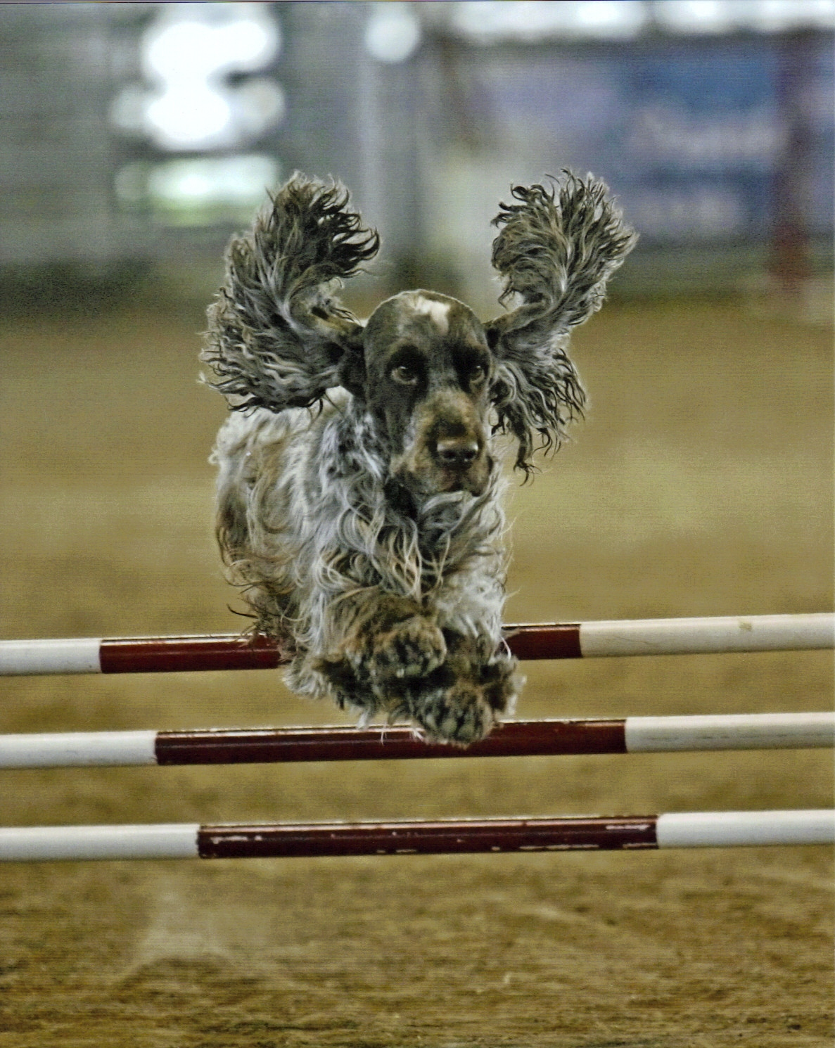 Monster Jumping