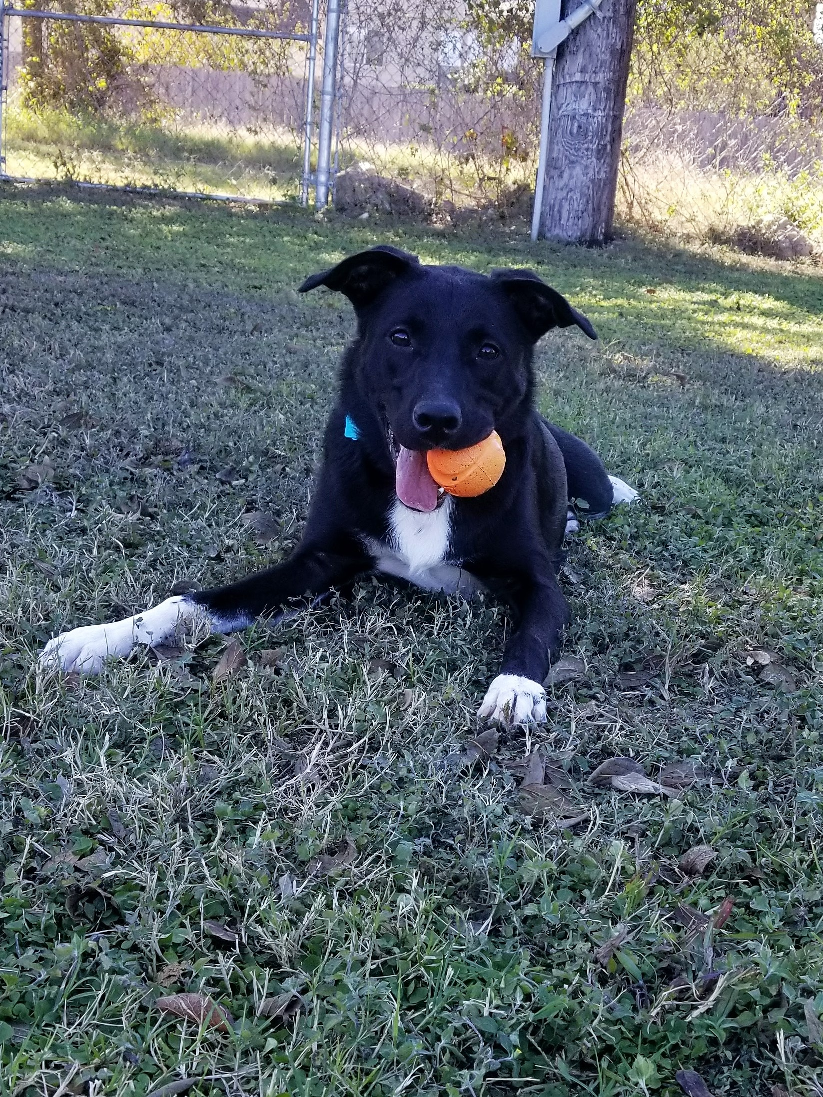 Belle with her Ball