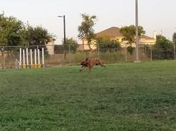 Jay Racing