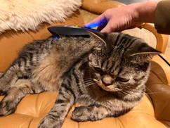 Laserebehandlung bei einer Katze