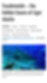 Tiger sharks Fuvahmulah Tiger Zoo