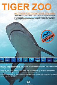 Tiger Zoo Fuvahmulah Tiger Sharks