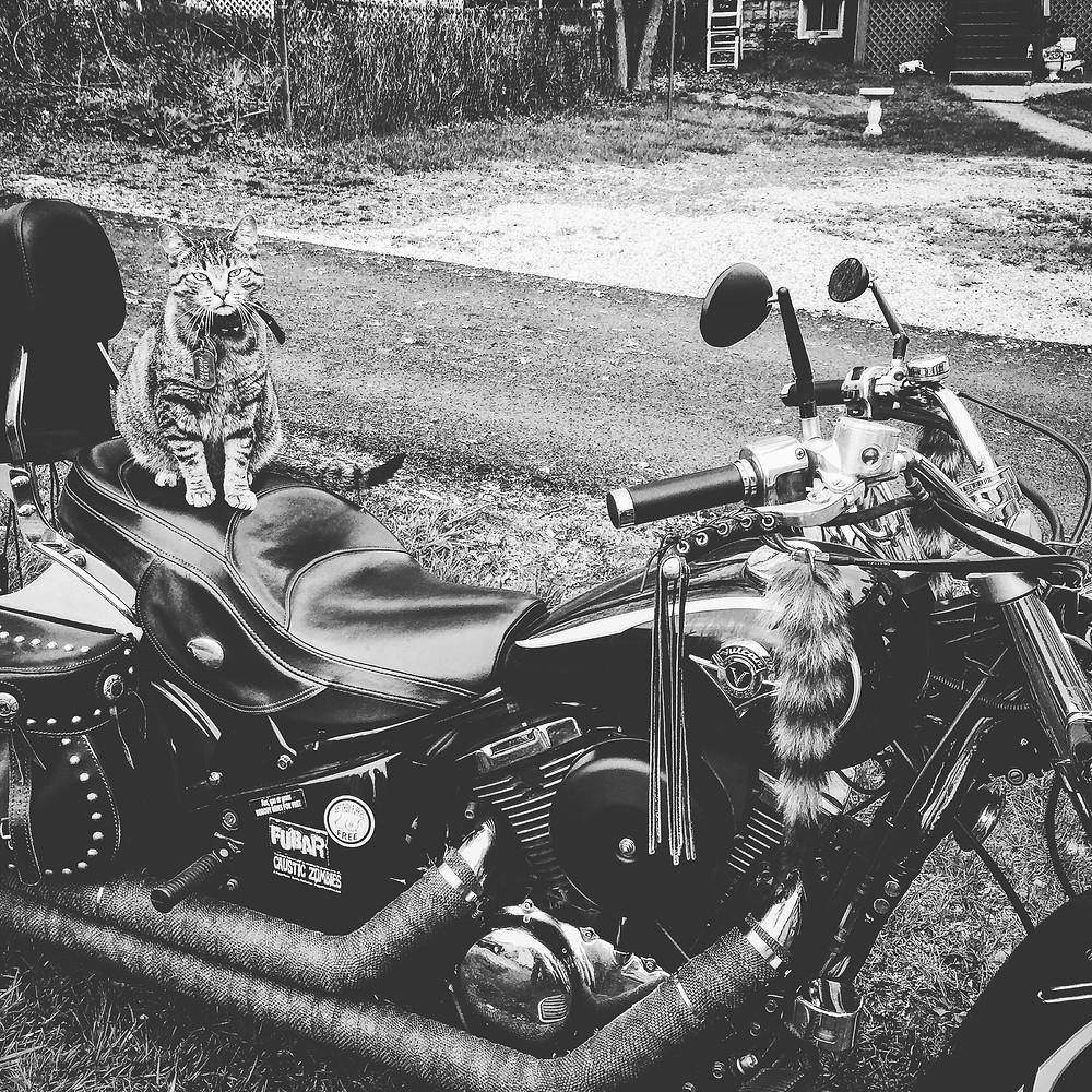 Ray's Bike
