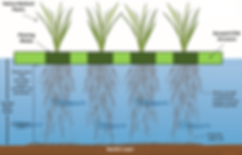 floating wetland diagram.png