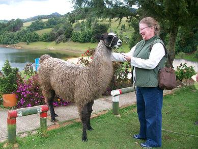 with llama, Seaside Knitting Bags
