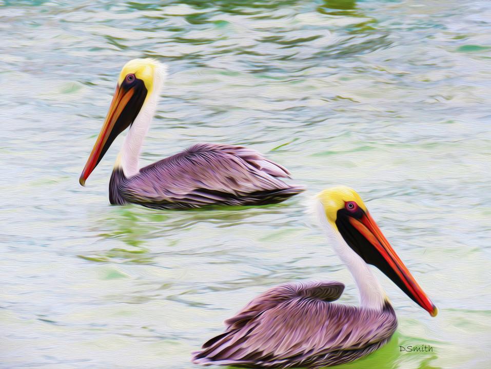 Pelican - Central America