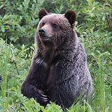 rsz_bear.jpg