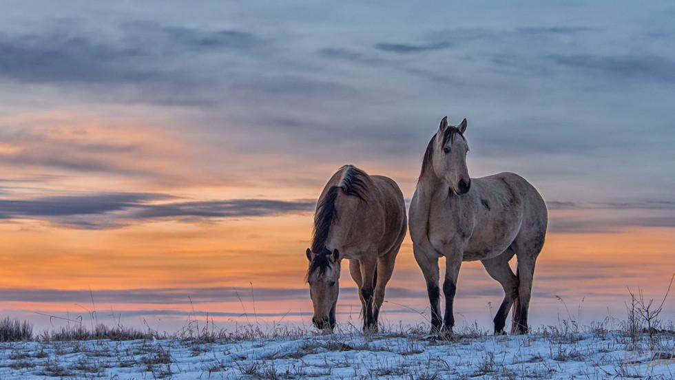 pat-johnston-horses-at-dawn-1-pat-johnst