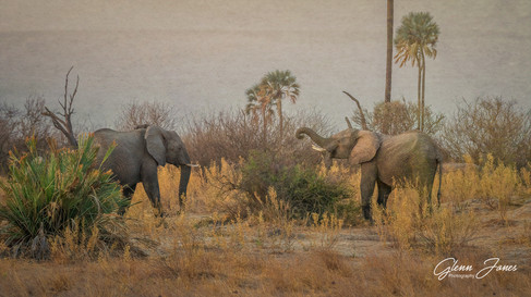 Dueling Elephants