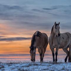 horses-at-dawn.jpg