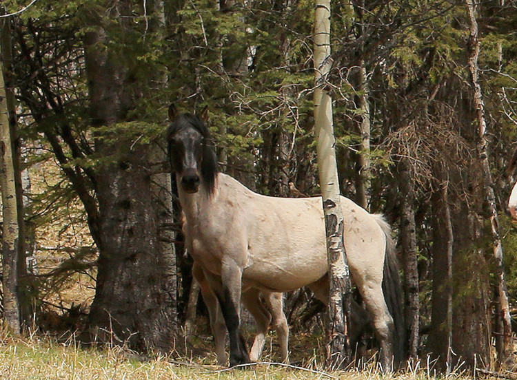 6 - The Ghost Mare.jpg