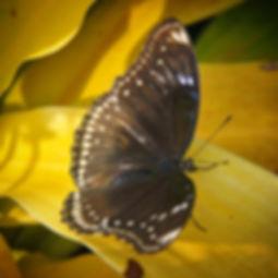 rsz_20100806175812_butterfly_copyright_d