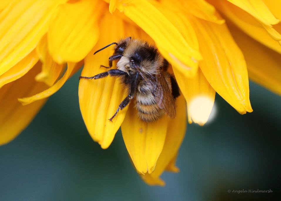 AJH Macro Bee