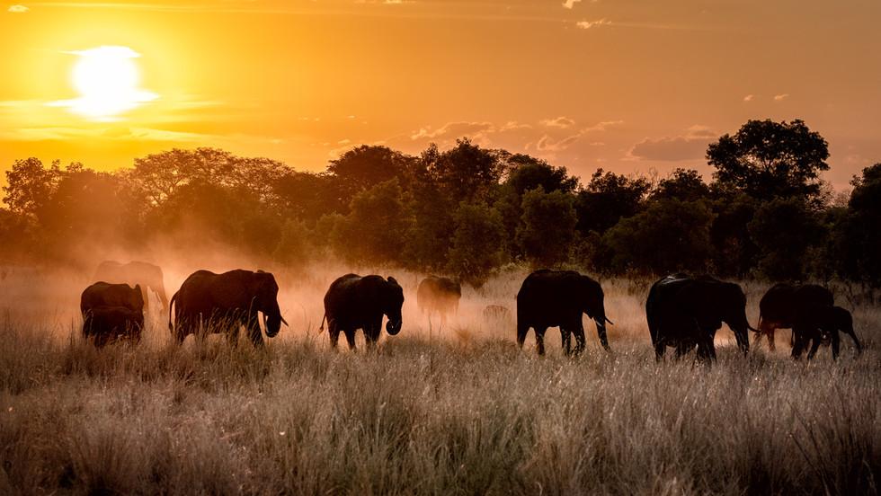 _DSC8685 - Elephant Herd - 20 by 16 - Ep