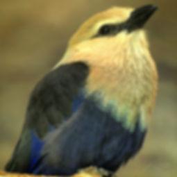 20090405_Bird_Copyright_DaRozaRONALD.jpg