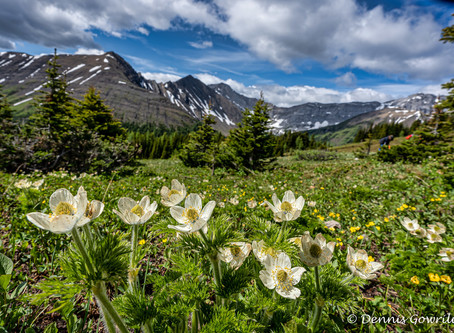 Wild Flower Hike Photo Outing to Ptarmigan Cirque July 17th, 2020