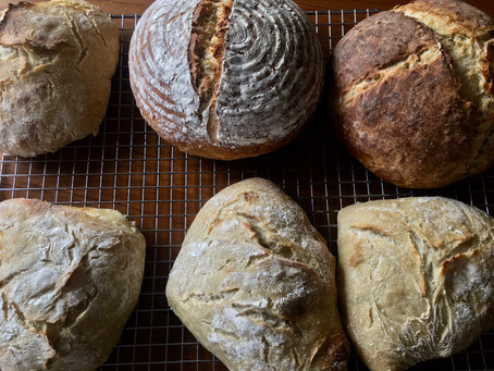 Sourdough Bootcamp--An Introduction