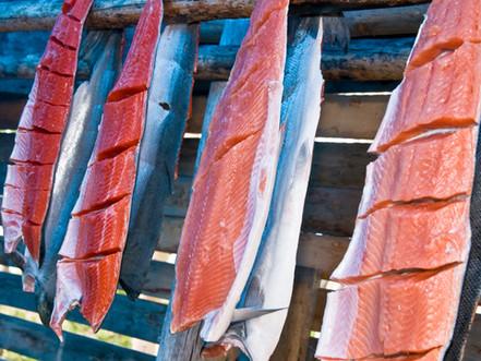 salmon drying _4208.jpg