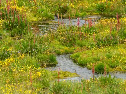 flower creek H-34610.jpg