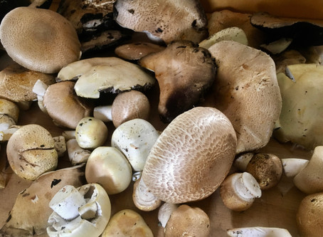 From the Vault: Mushroom Madness