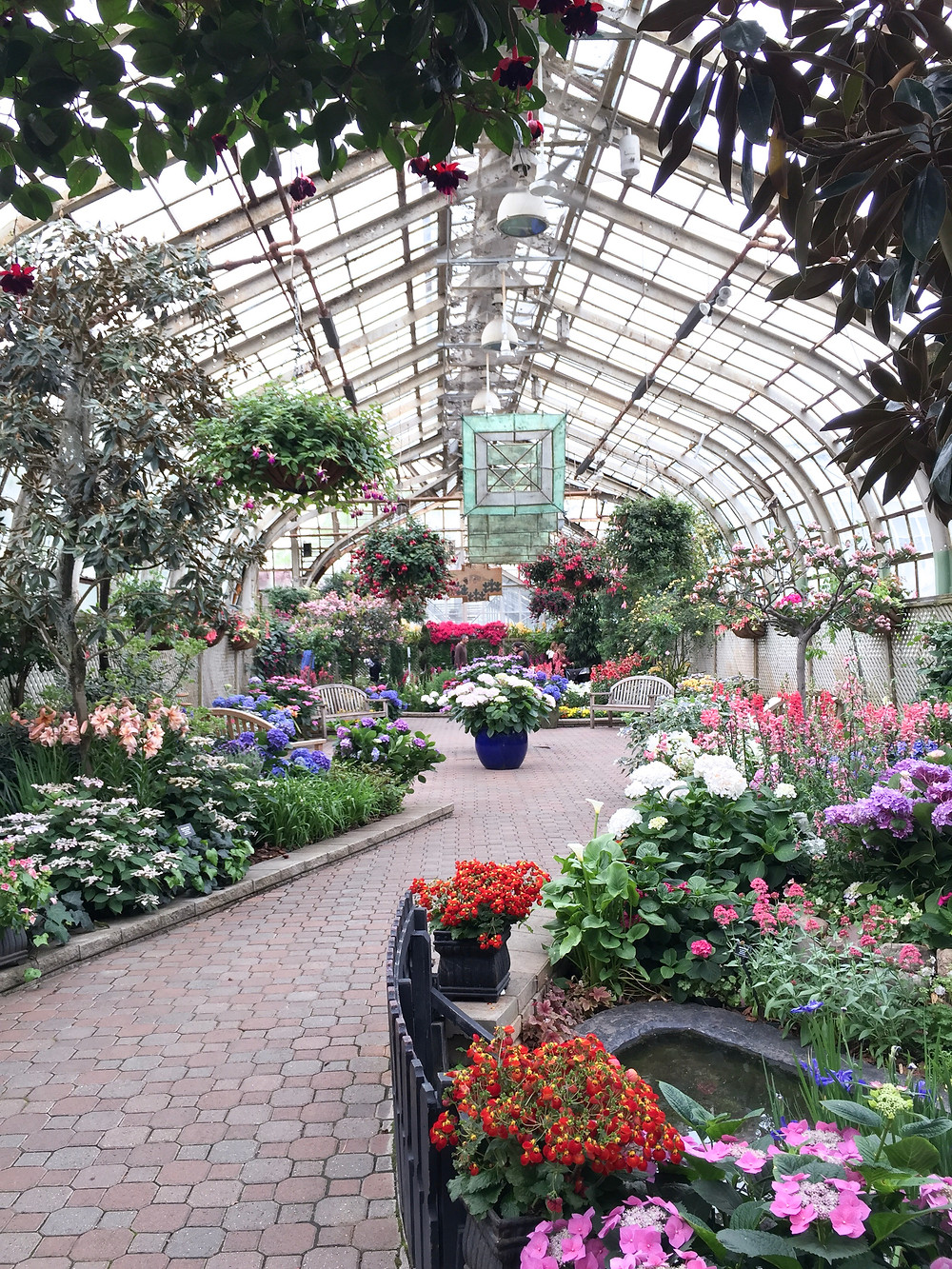 Flowers and plants at Lincoln Park Conservatory in Chicago