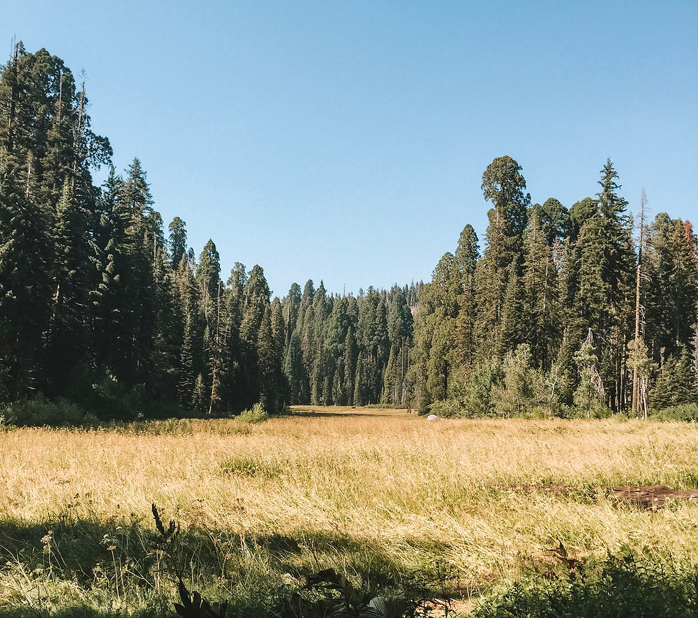 crescent meadow sequoia national park