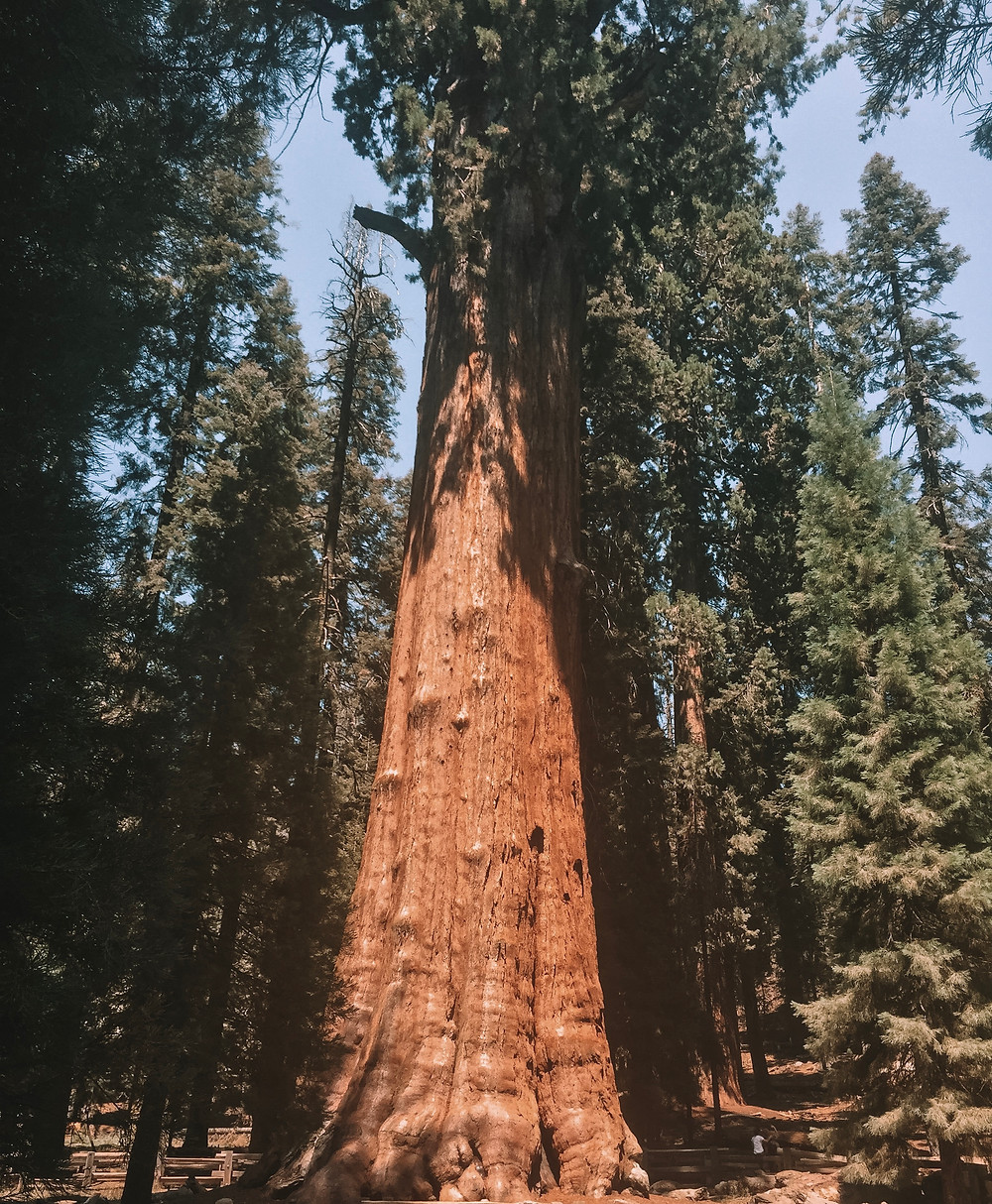 general sherman tree sequoia national park largest biggest world earth