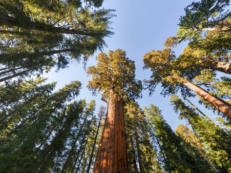 Sequoia National Park: What to See and Do in One Day