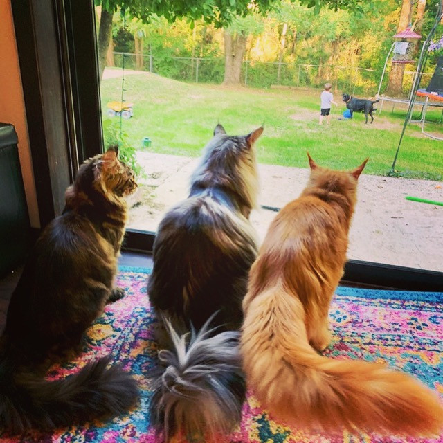 The crew of fluffy tails watching the dog play