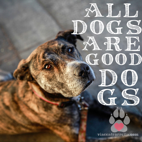 All Dogs Are Good Dogs