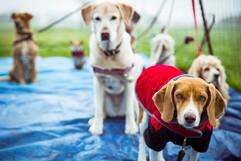 Tied Dogs.jpg