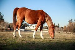 Horse Feed.jpg