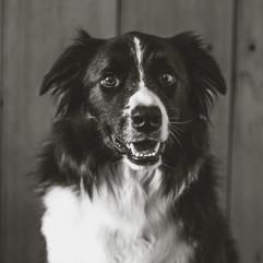iHealth Dog.jpg