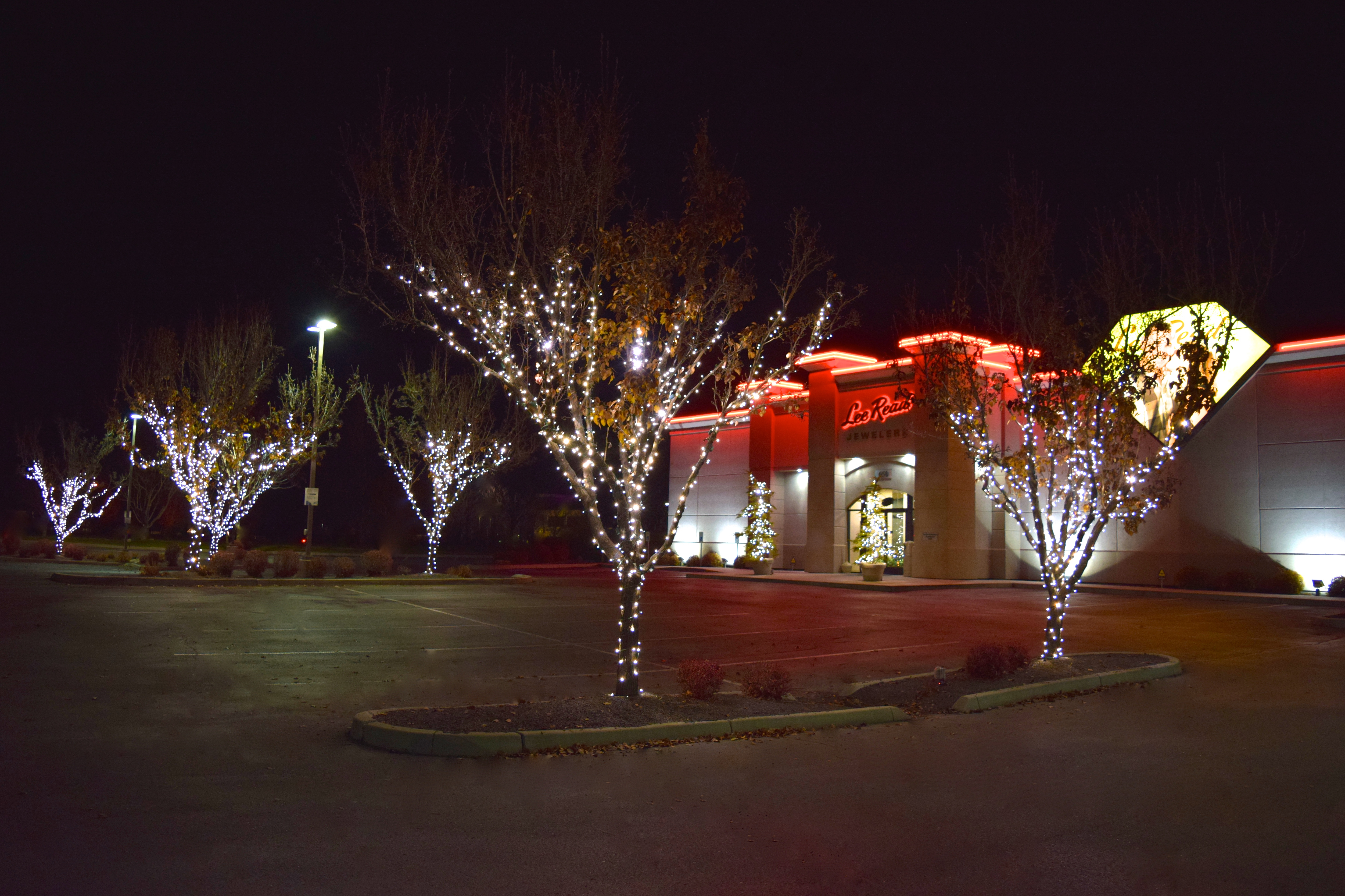 Lee Read Jewelers - LED Christmas Lights - Pure White Tree Wrap