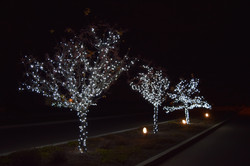 LED Christmas Lights - Tree Wrap - Pure White