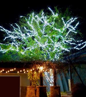 Martin, Wayne - Pure White Tree.jpeg