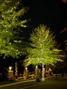 Lakemoor HOA 2019 - Warm White Tree 2019
